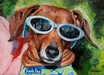 Cassey is a tan Dachshund with sunglasses on ready for her sailboat ride in Texas