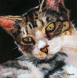 Custom cat portrait painting by Connie Bowen of Celeste who is a tabby cat living in Brazil. I love her golden eyes.