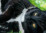Domino - Tuxedo cat with golden eyes laying on the green grass looking up at the sky