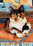 Stunning calico cat on orange tiles on patio with blue cushions