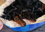 Little Buddha and Gracie are two Doxies cuddled up together. Little Buddha is a Dachshund puppy