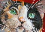 Maya - a beautiful calico cat with luscious green eyes