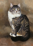 Brown Tabby Cat with mottled background